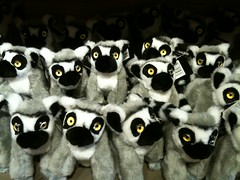 animal, primate, lemur,
