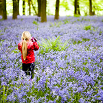 Taking Photos in the Bluebells
