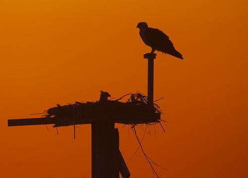 sunset birdwatcher
