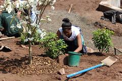 student planting at wetland