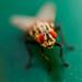 fly by Alexei Kulish