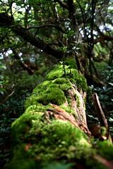 Moss at Hakone - 04