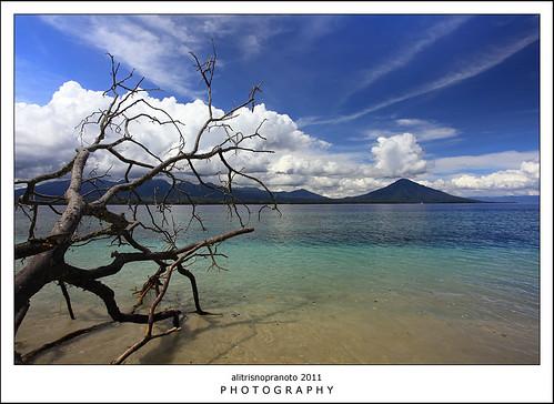 sea tree indonesia landscape bluesky malukuutara northmaluku tobelo northhalmahera halmaherautara