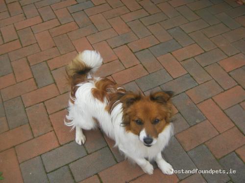 Tue, Mar 27th, 2012 Found Male Dog - Drumraney, Athlone, Westmeath