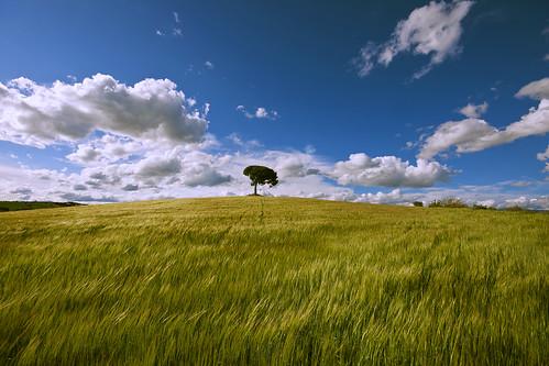 tree primavera field clouds landscape spring nikon sigma catalonia catalunya camps 1020 catalogne d90 christianalicia ilobsterit