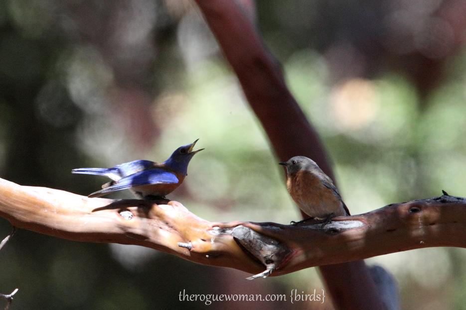 050312_13_idyll_bluebird
