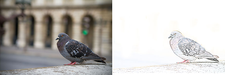 Parisian Bird Before and After