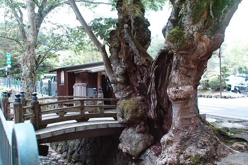 The witness of the history of Koyasan by leicadaisuki