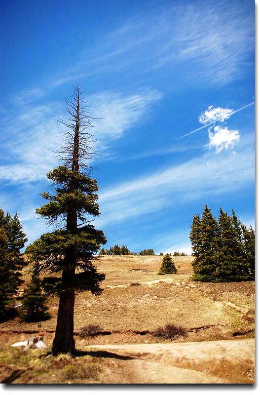 Hoosier Pass Loop Trail