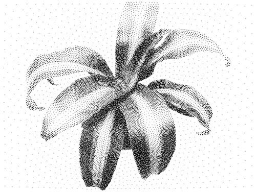 plant10kdots
