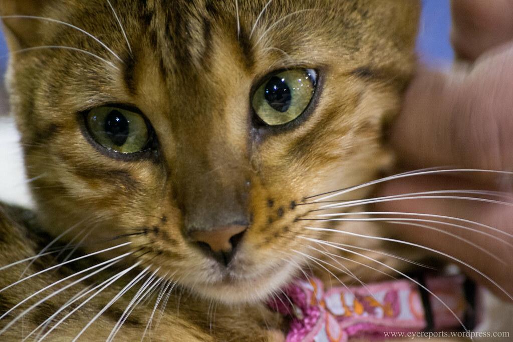 Animal Pets Welfare Groups