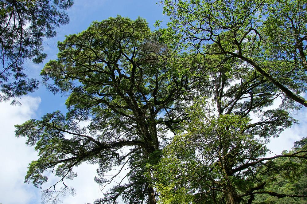 巨木群,與往拉拉山的路上-055
