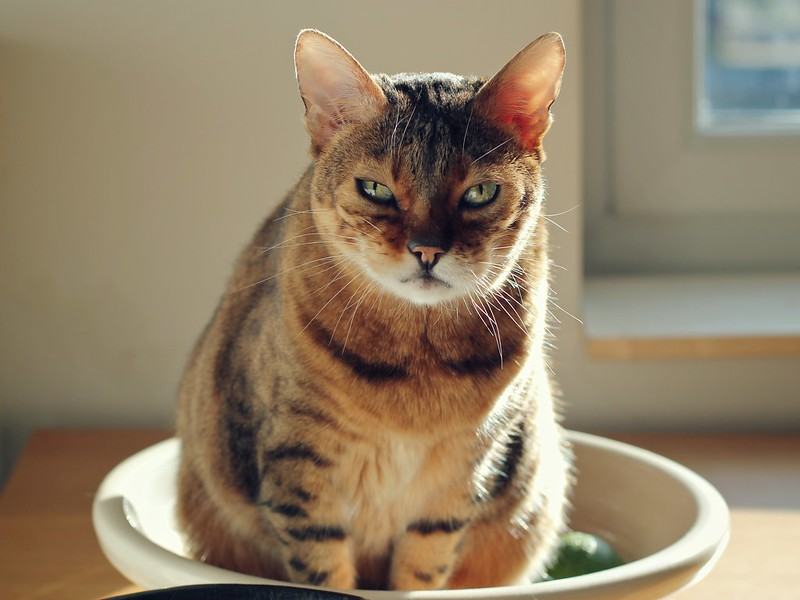Rani sitting in the fruit bowl