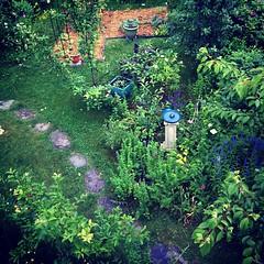 June 25 garden #organicgarden #urbangarden #zone6a