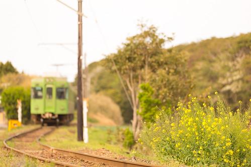 railroad japan train canon spring railway 電車 春 千葉 鉄道 ローカル線 localline 銚子電鉄