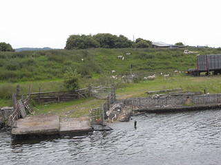 Sheep jetty