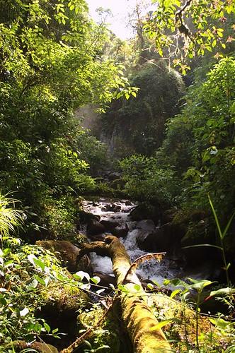 montagne rivière boquete panama foret randonnée ameriquecentrale lostwaterfalls sendero3cascadas