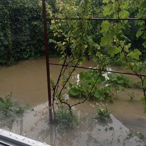 А из нашего окна лужа мутная видна! Это мой огород, ныне подводная плантация! Навскидку слой воды около 30 см  #старыйкрым