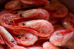 arthropod, shrimp, animal, seafood boil, dendrobranchiata, caridean shrimp, fish, seafood, invertebrate, food,
