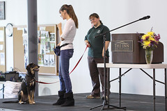 Image Result For Dog Training Rochester