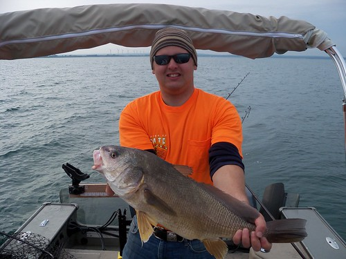 Sam i am charters bass and walleye gallery for Lake erie perch fishing charters
