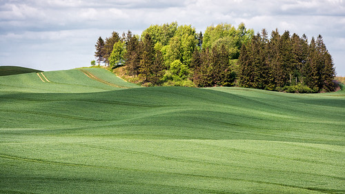 green field forest skåne spring shadows sweden hill bumpy crop bara rollinghills gentle undulations 2014 copse