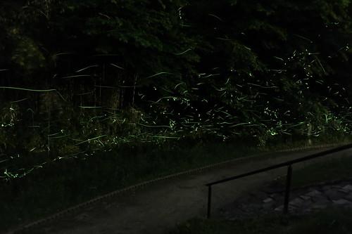 Firefly 2014