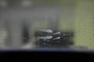 2014-05-17 Baby fish