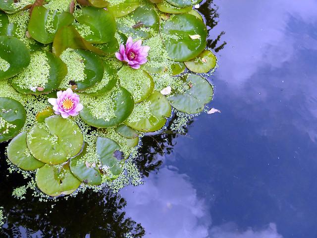 Japanese Peace Gardens | #dpdressselfie