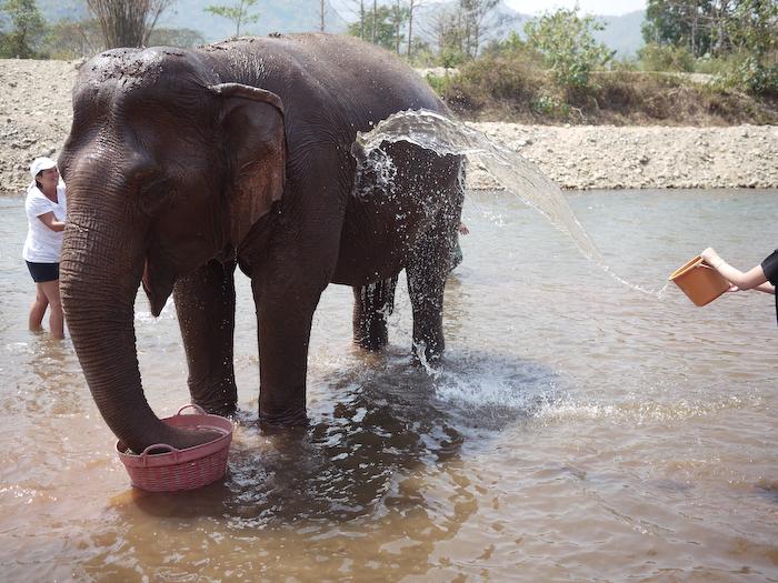 Elephant Nature Park Chiang Mai-20