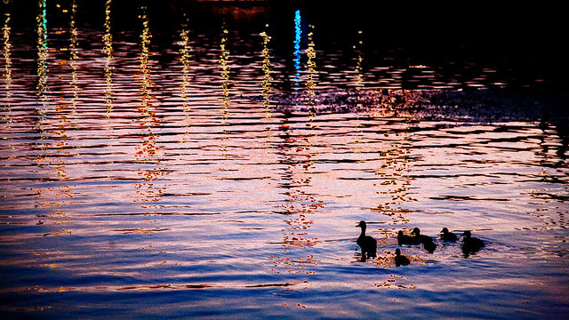 Family during an evening stroll.