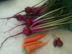 carrot, vegetable, red, produce, food, beet, radish,