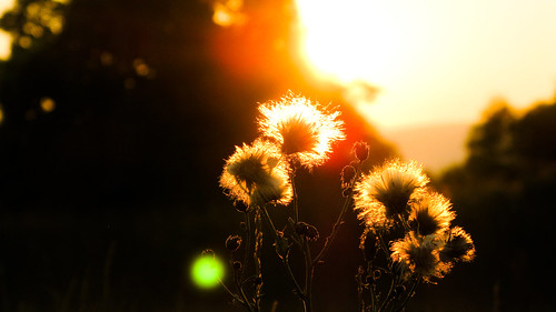 family sunset flower canon lens point shoot together flare taranghirani