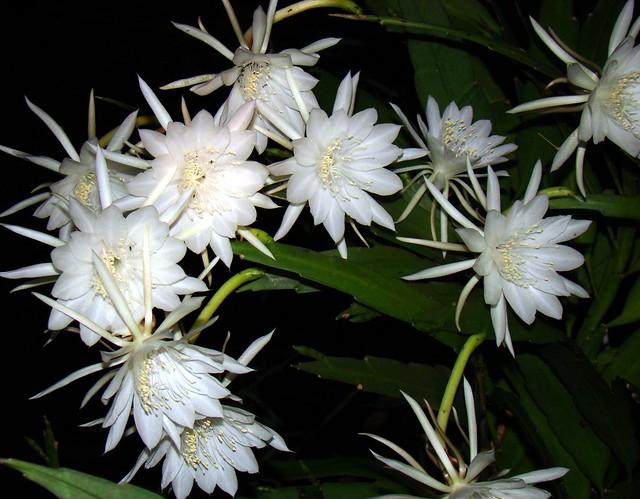 El Reino Plantae Flores Más Caras Del Mundo