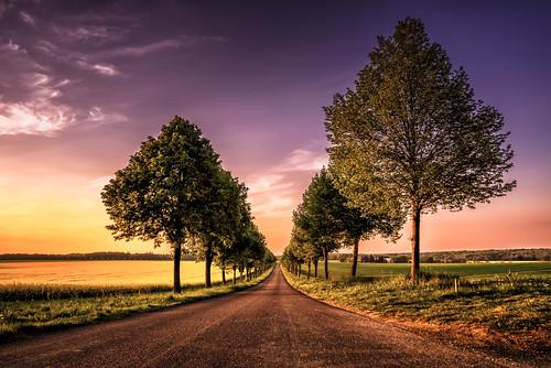 sunset tree day sonnenuntergang baum rapsfeld strase pwpartlycloudy