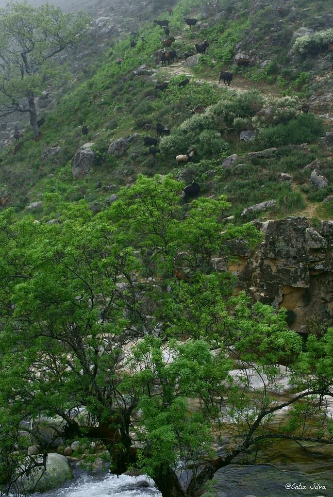 Reserva Natural de la Garganta de los Infiernos_Valle del  Jerte (14)