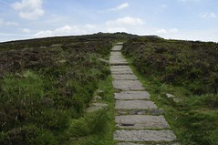 Back Forest to The Roaches (482)