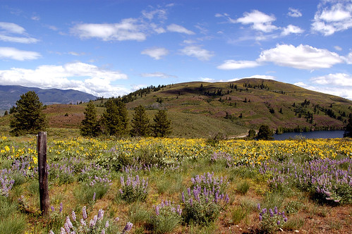 Wild flowers in Spring near Winthrop,Washington