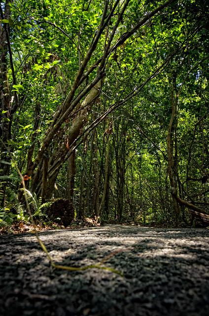 Gumbo Limbo Trail VIII