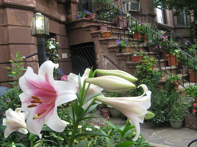 lily with stoop