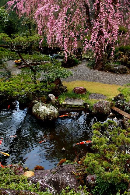 Hyotan Sakura_22