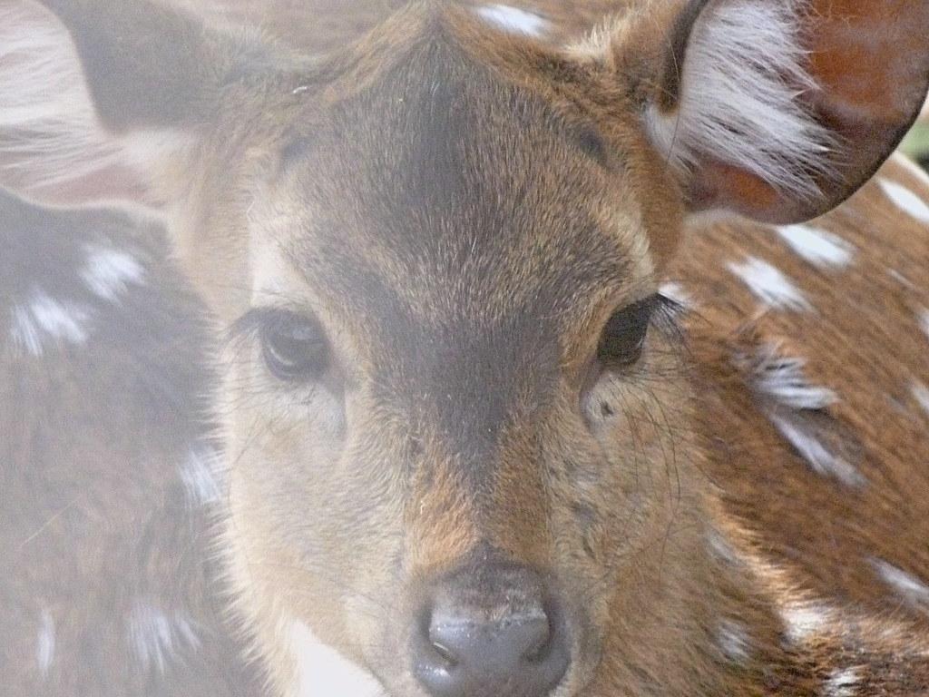 13-04-2012-oh-deer2