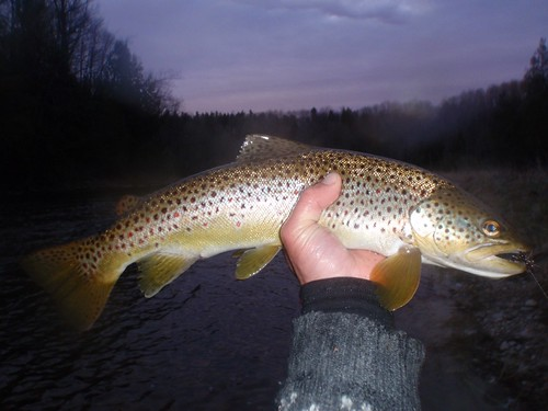 Fly fishing for Wild Adirondack trout