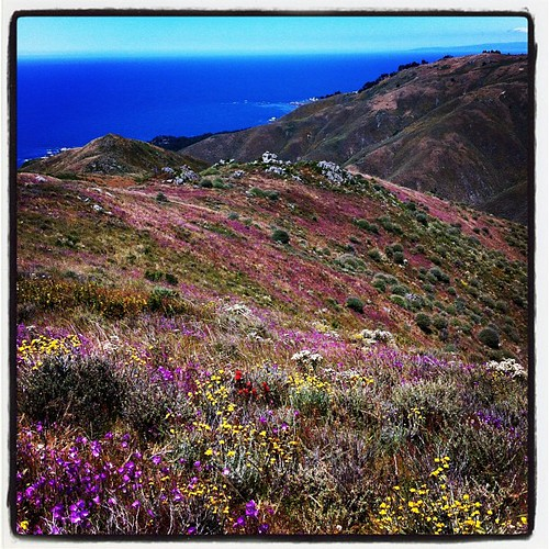 Wildflowers + Pacific