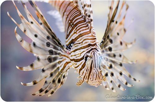 aquarium-11