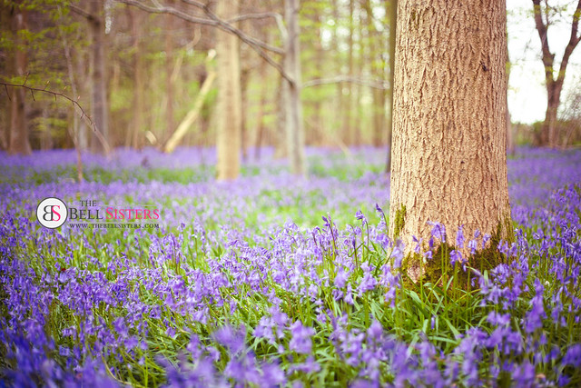 Bluebell Woodland - Day 284/365