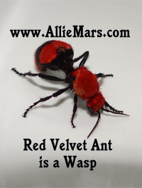 Cow Killer Wasp, Red Velvet Ant