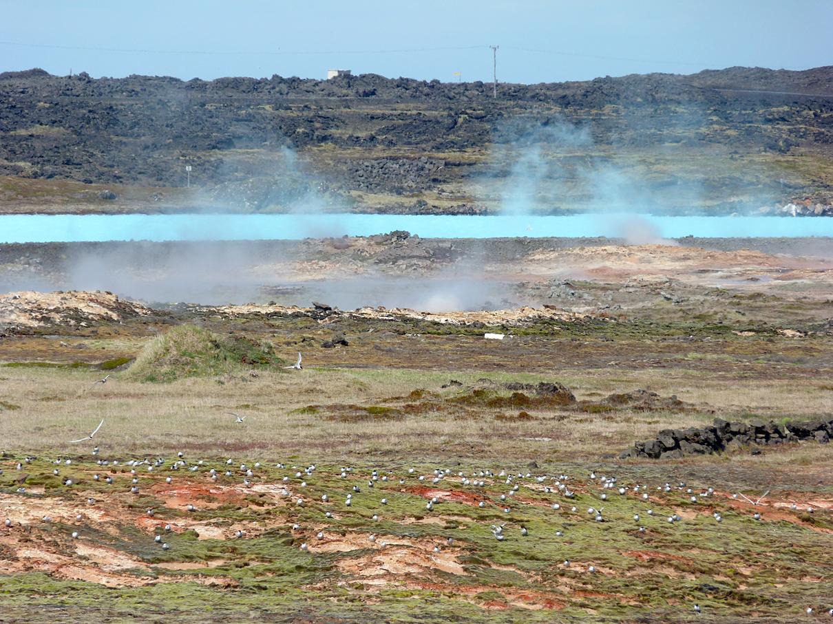 Reykjanes Mud Pools