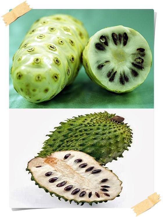 Mengkudu & Durian Belanda ~