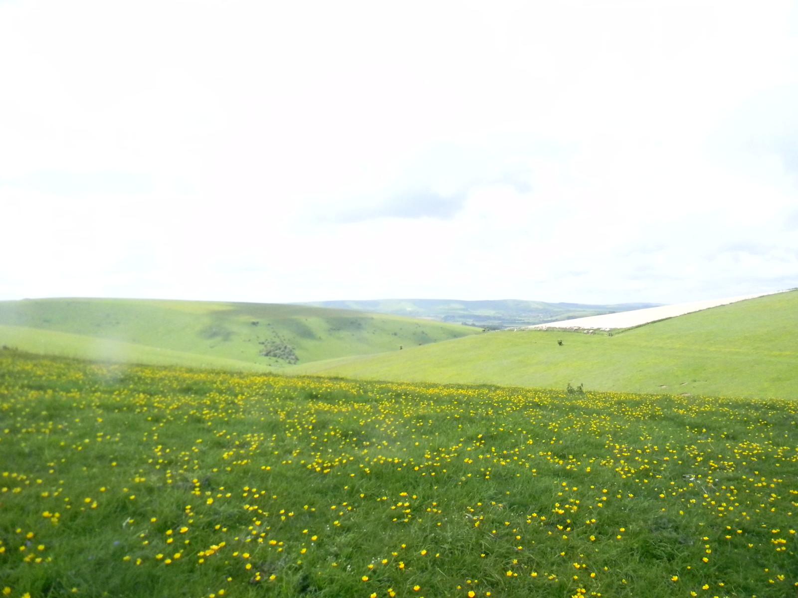 Buttercups Lewes Circular via West Firle